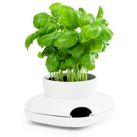 Pot à Herbes Aromatiques De Cuisine Sagaform - Herbes aromatiques en cuisine
